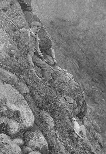 Saint Kilda, chasse aux oiseaux, 1898